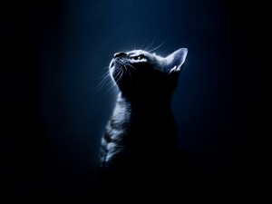 Кошки, светящиеся в темноте, помогут найти средство от СПИДа