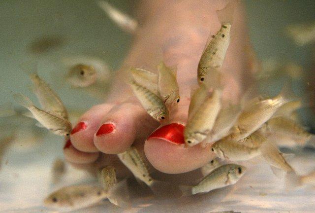 Рыбный педикюр: есть ли риск заразиться опасной болезнью?