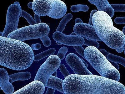 Предупреждение! Гавайская бактерия может привести к смертельному исходу