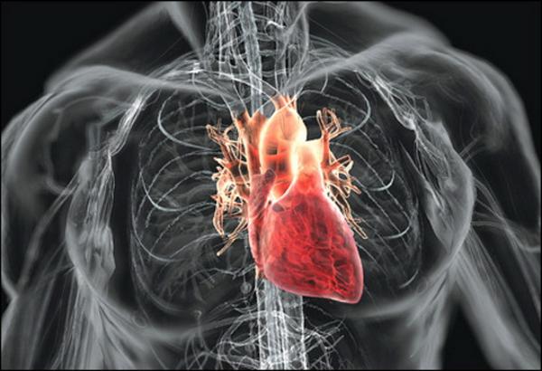 Ученые выяснили, как ВИЧ воздействует на сердечную мышцу