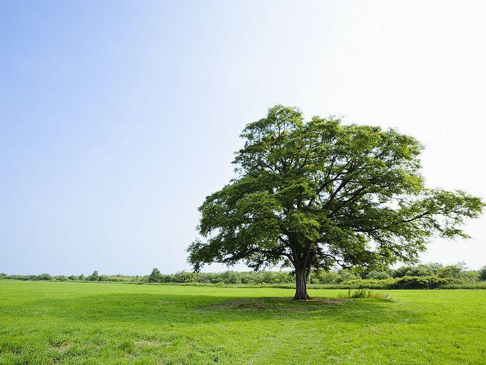 Деревья могут стать причиной смерти ВИЧ-больных