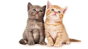 Кошки могут помочь в борьбе против ВИЧ