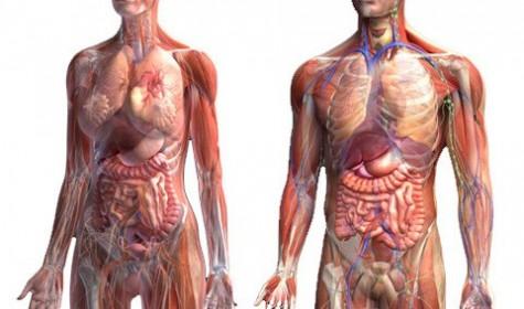 Несовершенства человеческого организма