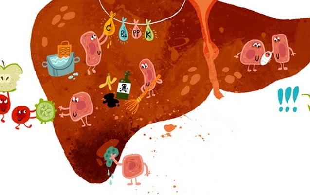Правильное лечение токсического гепатита