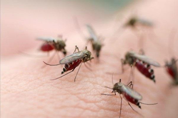 От малярии поможет новое лекарство