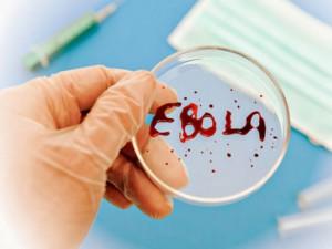 Массовое производство перспективной вакцины против лихорадки Эбола станет возможным только через несколько месяцев