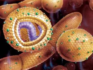 Гепатит С диагностируется только в одной четверти случаев