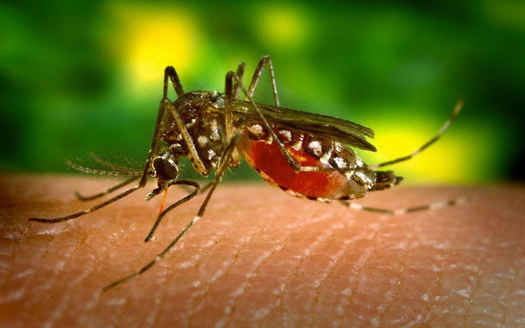 Столица Индии столкнулась с крупной вспышкой лихорадки денге