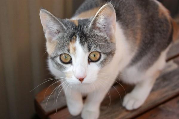 Ученые: кошки способны помочь в поисках вакцины от ВИЧ