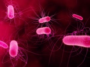 Ученые обнаружили в Европе новую смертельную инфекцию