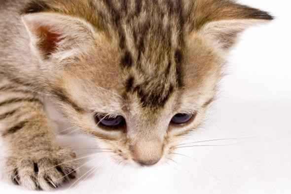 Польза от кошки в городской квартире.