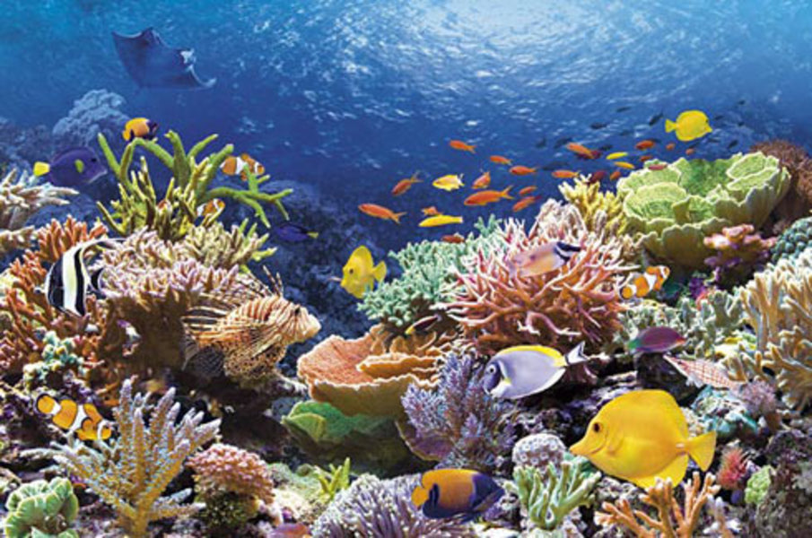 Белки из коралловых рифов способны предотвращать ВИЧ