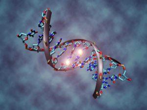 Учёные смогли вырезать сегмент ВИЧ из ДНК живого организма