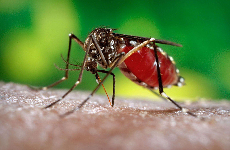 Ученые: вирус Зика может привести к смерти