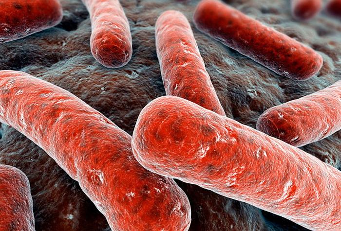 Личинками можно лечить туберкулез