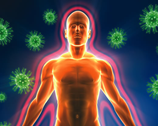 Иммунитет зависит от кишечника
