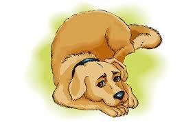 Ветеринария Био-Вет – лечение остеосаркомы у собак и иных болезней по самым лояльным ценам