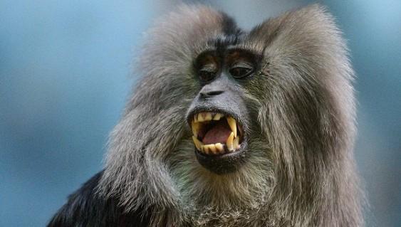Приматологи излечили макак от аналога ВИЧ