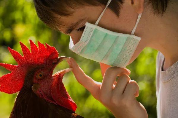 Профилактика птичьего гриппа