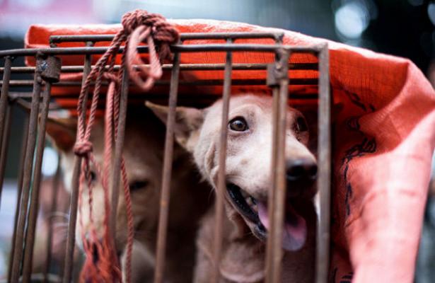 Во Вьетнаме растет количество смертей от бешенства из-за плохой вакцинации домашних животных