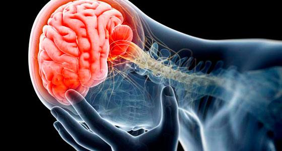 Для контроля дыхания мозг может быть не обязателен
