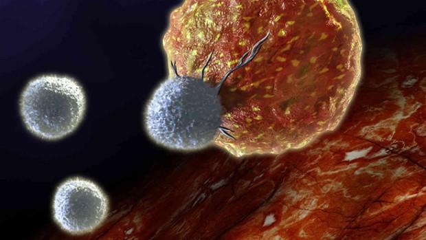 Рак можно вылечить, используя чужой иммунитет