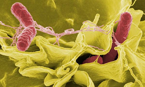 Иммунитет догадывается об инфекции по разрушенному цитоскелету