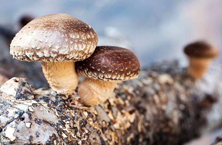 Влияние грибов на раковые клетки