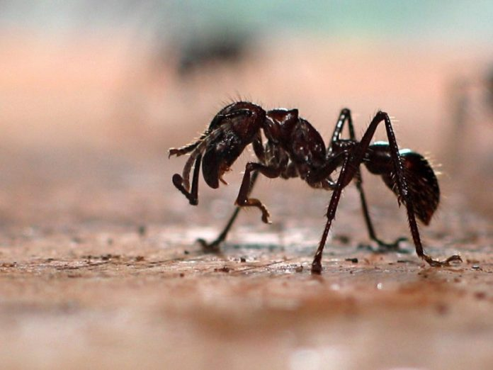 Эти насекомые наиболее опасны для отдыхающих на открытом воздухе