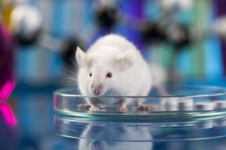 Грипп опасен для мозга: ученые пришли к неожиданному выводу