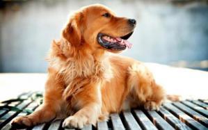 Ученые заявили об опаснейшем вирусе, исходящем от собак