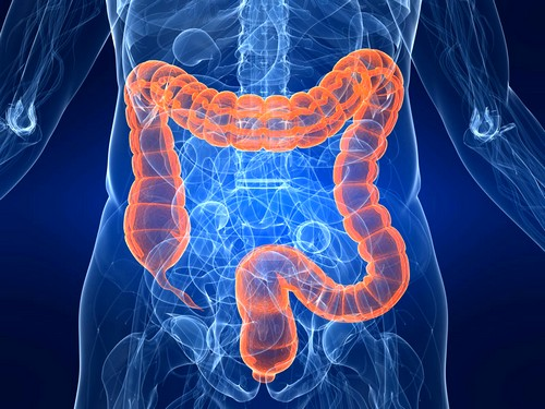 Обнаружена причина хронического воспаления в кишечнике