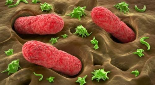 Стандартные методы обследований часто пропускают инфекции госпитальных штаммов