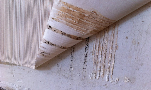 Как избавиться от грибка на стенах и потолке?
