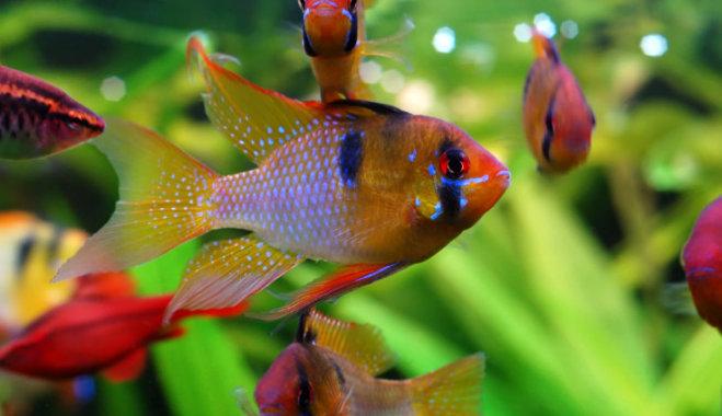 Что делать, если гибнут рыбки в аквариуме.