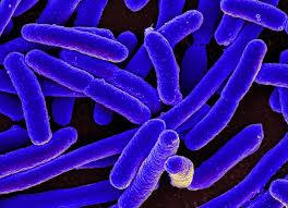 Бактерии мутировали и не боятся антибиотиков