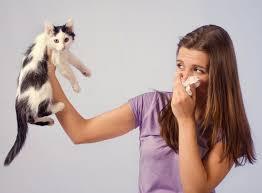 Аллергия на шерсть домашних питомцев. Как предотвратить дискомфорт?