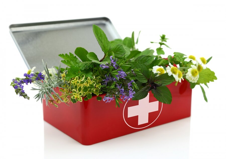 Польза лекарственных трав и противопоказания