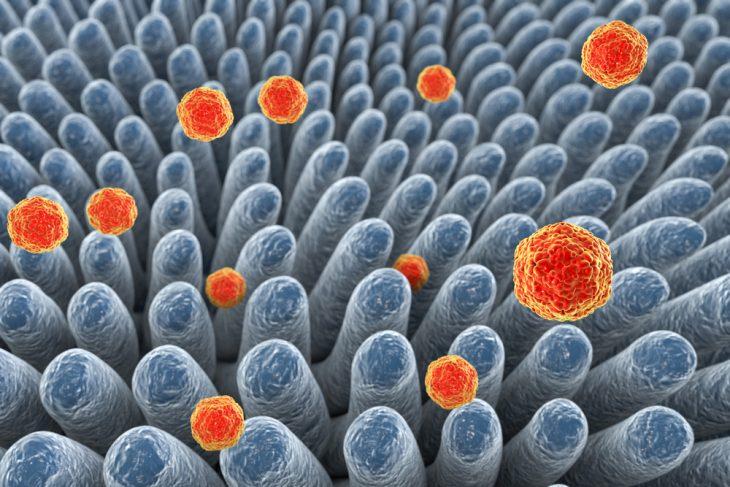 Средство передачи вируса гепатита А