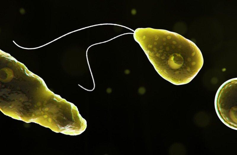 В теплой пресной воде может содержаться опасный паразит