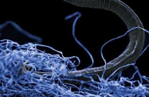 Чем опасны бактерии, живущие на смартфоне