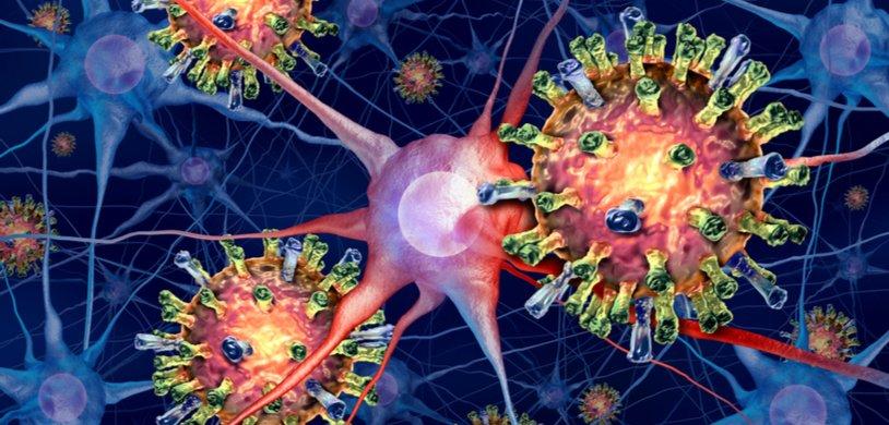 Вирус кори разрушает иммунную память