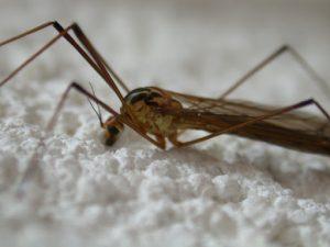 Исследователи узнали, как остановить опасную тропическую инфекцию