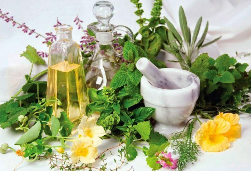 Лекарственные растения для повышения иммунитета