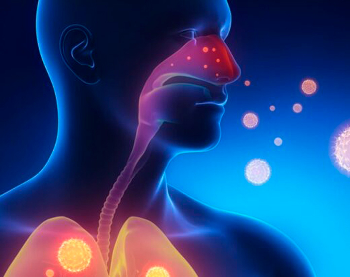 Укрепление иммунитета: Кверцетин, цинк и синергия с витамином С