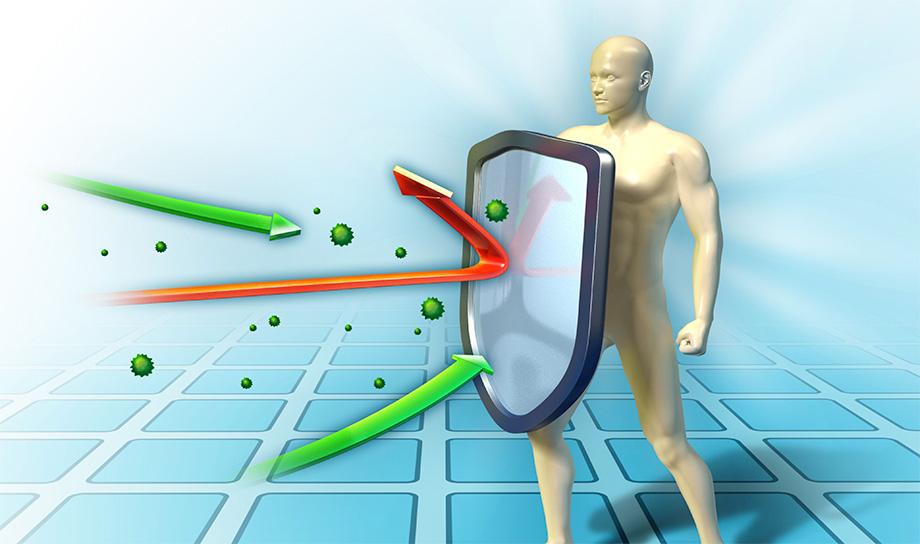 Как укрепить иммунную систему