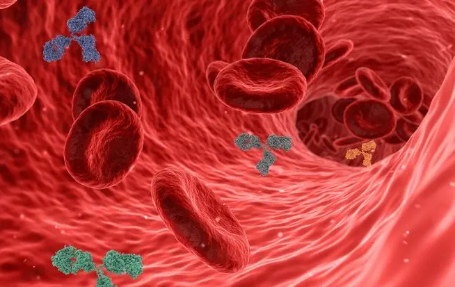 Иммунолог рассказал, как антитела могут ослаблять противовирусную защиту организма при коронавирусе