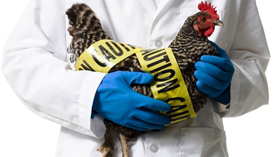 Медики рассказали о симптомах заражения птичьим гриппом