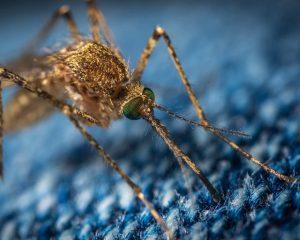 Появилась первая высокоэффективная вакцина против малярии