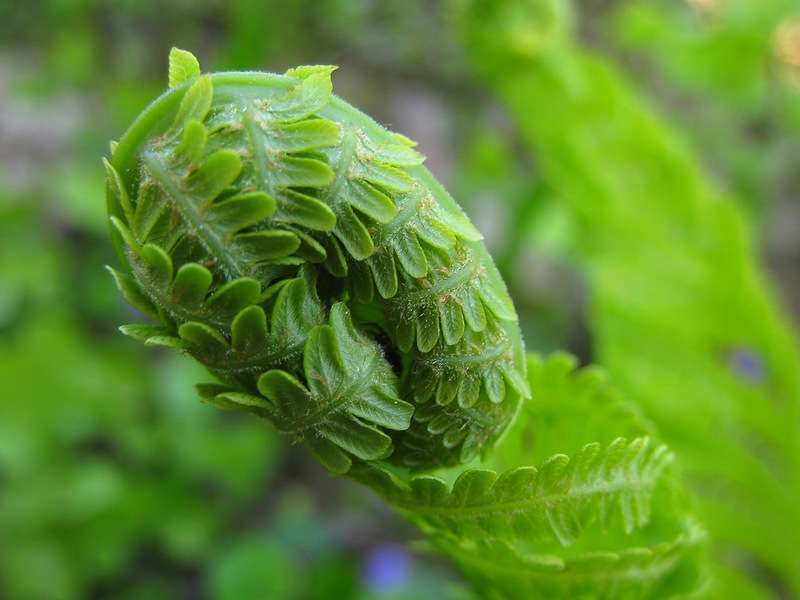 Ученые назвали 5 удивительных растений для борьбы с болезнями и инфекциями